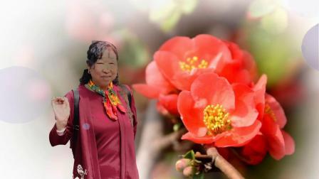 火红的海棠闺蜜的爱