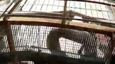 鸢飞管业现场衬瓷 (2)