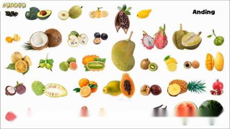 热带水果图片播放
