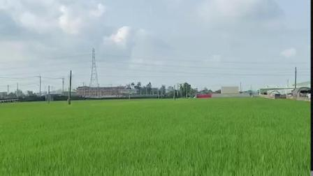 亞拓全自動導航植保機 - 嘉義水稻農噴作業