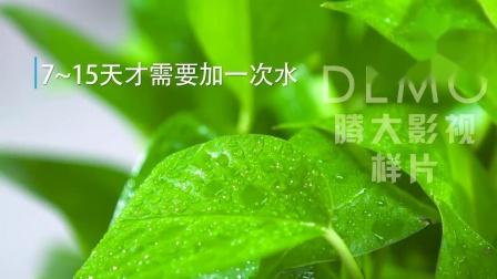 绿萝主图视频产品展示家具绿植植物淘宝京东亚马逊广告片拍摄制作