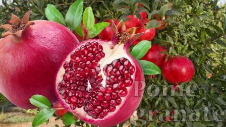 宝宝学英语,认识常见水果,学会常见水果的英语发音
