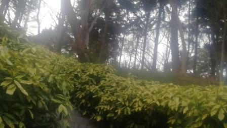 中山公园美景