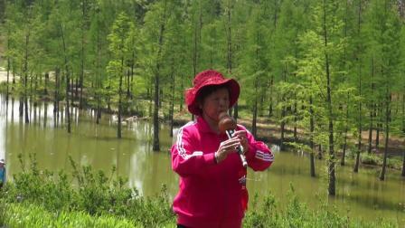 葫芦丝独奏:荷塘月色  演奏者:自由城葫芦丝俱乐部 周瑞芳