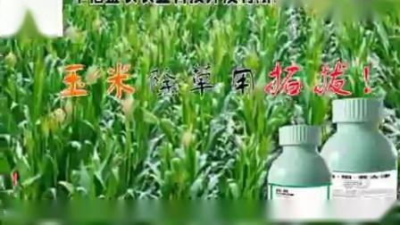 拓拔玉米苗后除草剂
