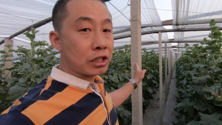 雨宏农业网纹瓜