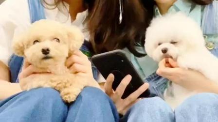 【VAPP】Davichi comeback D-4 手纸土豆meeting