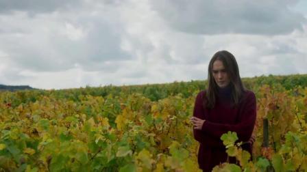 法国乡村葡萄园