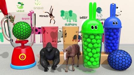 宾果歌曲学习颜色与兔子模具和微波玩具粘球为儿童儿童儿童