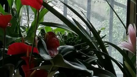 花卉:我家阳台盆栽多种鲜花