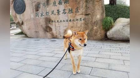小狗霍霍扬州一游(2019-05-26)