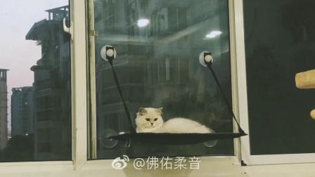 猫咪泡芙的景观台。
