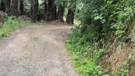 误入原始丛林…走到下面才发现…原来是个坑…