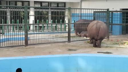 郑州动物园 犀牛