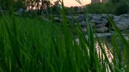 夜幕降临之时,漫步湿地公园