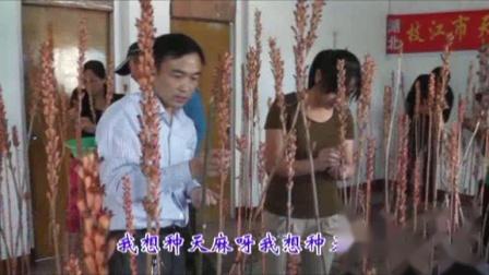 天麻歌-天麻专家张东祥歌舞演示