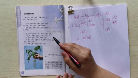 教科版三年级下册科学第一单元复习视频