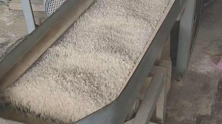 我们吃的大米是怎样来的