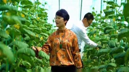寿光绿色家园益生菌蔬菜基地宣传片_德经商业生态圈