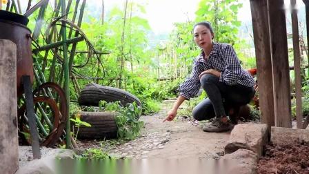 看在农村要怎么铺路,幺妹儿去河边上捡了几蛇皮袋鹅卵石就可以了_超清