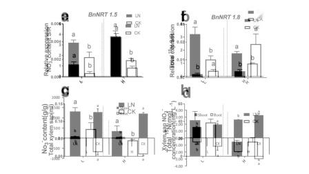 (一作讲解)J Agr Food Chem:湖南农大   低氮提升油菜氮利用率新机制