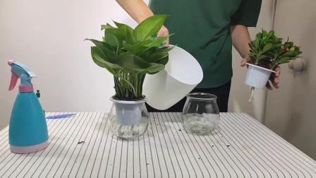 玻璃水培植物