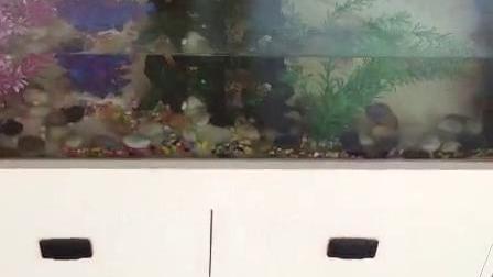 可以养金鱼的实木多层板