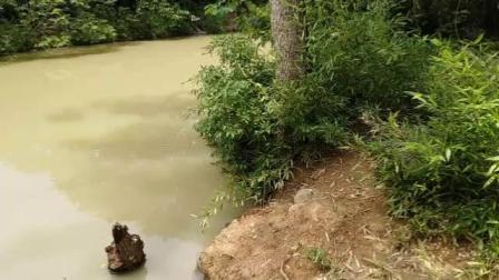 二零一九年六月廿三日游中国扬子鳄景区(手机随拍)