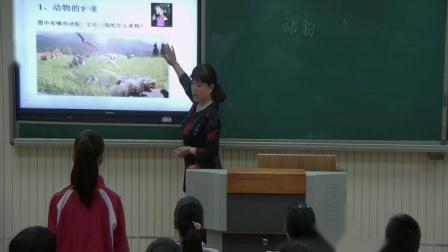 冀人版小学五年级科学上册生物生长的需要5 动物的食物-刘老师优质课视频(配课件教案)