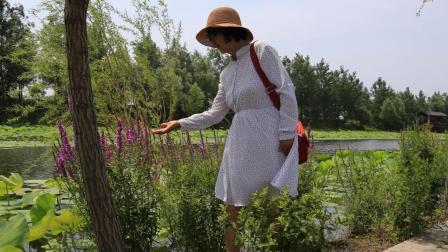 自驾游-辽阳太子岛-柳豪湿地