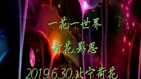 2019.6.30.北宁荷花.一花一世界