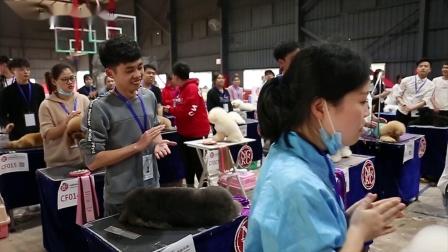 厦门威廉张宠物美容培训学校带队参加2019年3月厦门宠物美容师培训生比赛