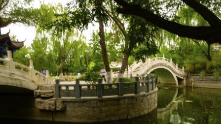 天津西沽公园夏季风景荷花
