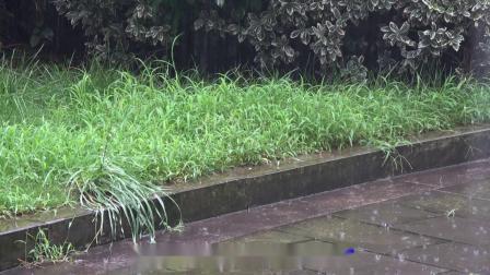 张蓉蓉--雨中情【闽南语】★