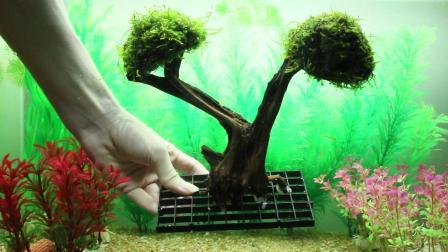分享一些自制莫斯树 鱼缸造景水草造景莫斯树水草树沉木树摩斯树苔藓树水族箱草缸水族景观装饰