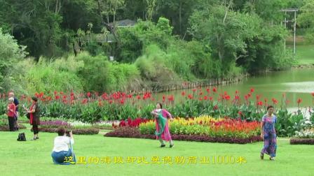 缅甸游之皇家植物园