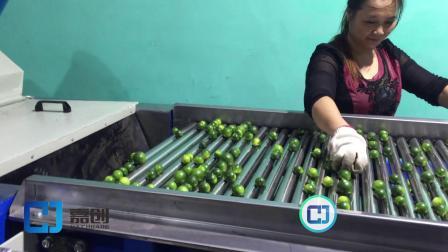 海南小金桔抛光分级机   分选机  水果筛选机 果蔬加工设备