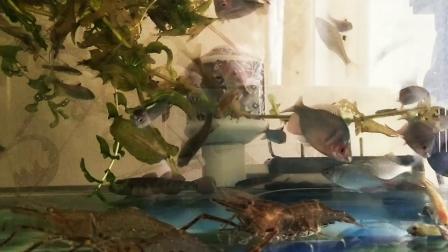 快乐的鱼、虾小伙伴