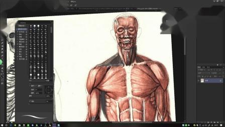 50-男肌肉