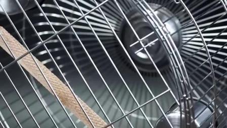 鹦鹉笼子虎皮画眉不锈钢鸟笼八哥鹦鹉笼鸟笼子大号小号小型川笼