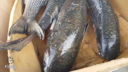 鱼类市场鲜鱼市场亚洲最大的鱼类市场