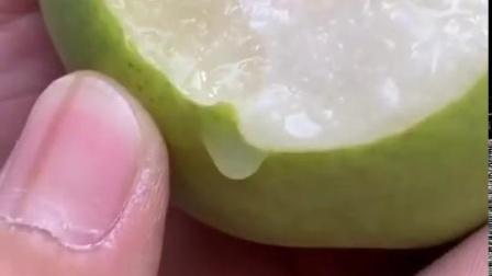 现摘青梨翠冠梨10斤新鲜孕妇水果绿宝石梨子非砀山皇冠梨丰水梨