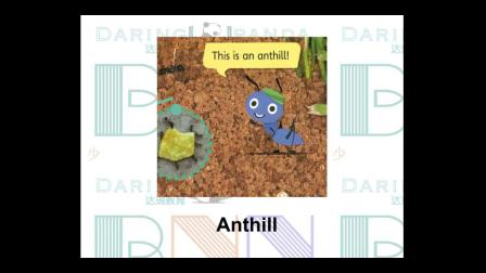 Ant Family-蚂蚁家族-达瑞英语-DaringPanda Kids English Education-English Class