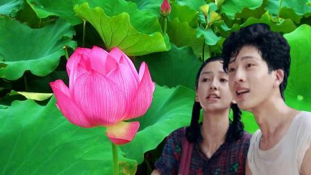 一道道美景 一朵朵莲花