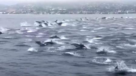 VIDEO Huge group of dolphins caught on camera