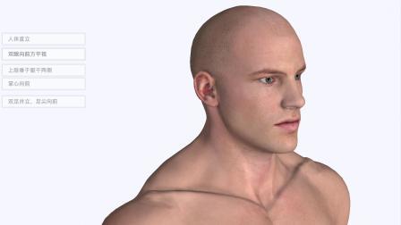 3系统解剖学3D-标准解剖姿势和方位术语
