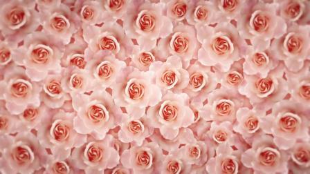 c594 4K高清画质唯美粉色玫瑰花墙旋转婚礼婚庆情人节表白歌舞表演节目舞台背景视频全息投影  蓝天大海 视频背景