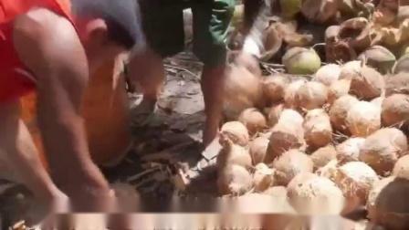 菲律宾进口椰来香天然冷压榨椰子油食用油健康营养烘焙护髮250ml