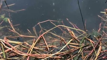 河里怎样钓鱼 玉米钓草鱼怎么挂钩 鲫鱼鲤鱼饵料配方