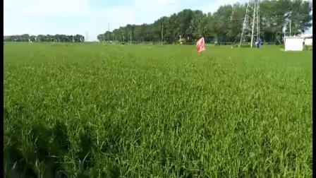 耕田乐缓解了水稻的药害?